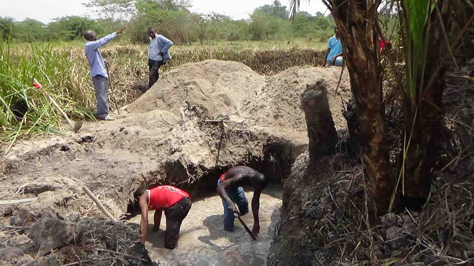 How Monitor story saved swamps from illegal miners in Kakumiro